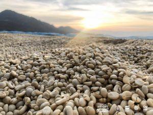 Read more about the article รู้ไหม?….ทำไมกาแฟจึงสร้างรายได้และเป็นเครื่องดื่มที่ได้รับความนิยมจากทั่วทุกมุมโลก