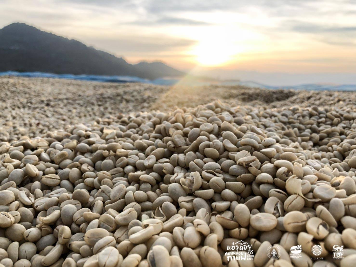 You are currently viewing รู้ไหม?….ทำไมกาแฟจึงสร้างรายได้และเป็นเครื่องดื่มที่ได้รับความนิยมจากทั่วทุกมุมโลก