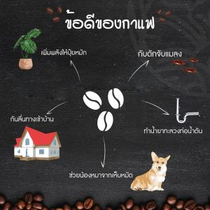 Read more about the article ข้อดีของกาแฟ EP.2