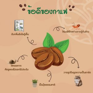 Read more about the article ข้อดีของกาแฟ EP.1