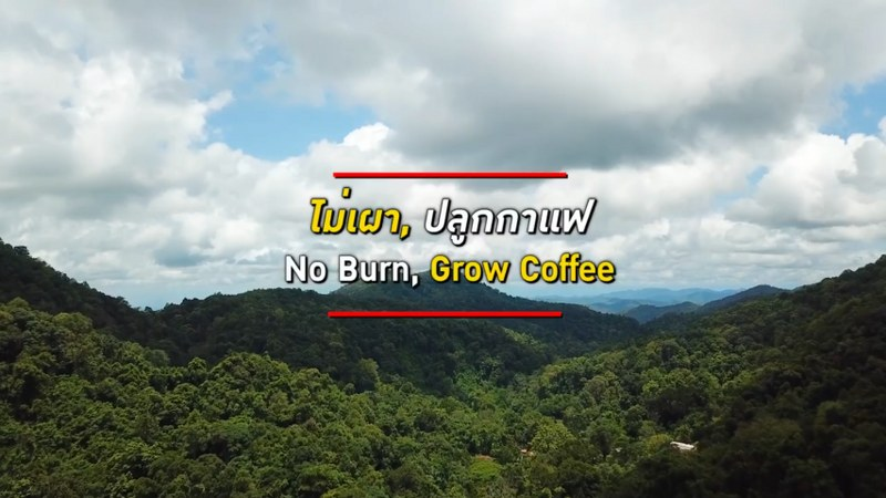 You are currently viewing Growing Coffee to Reduce Burning
